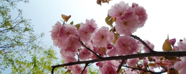 Spring in Beijing – Best Bloomin' Season of the Year