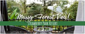 Strawberry Park Resort Cameron Highlands Inside the Mossy Forest